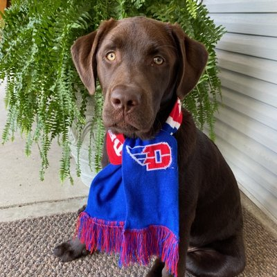 ALL STAR DOGS® PET SCARF